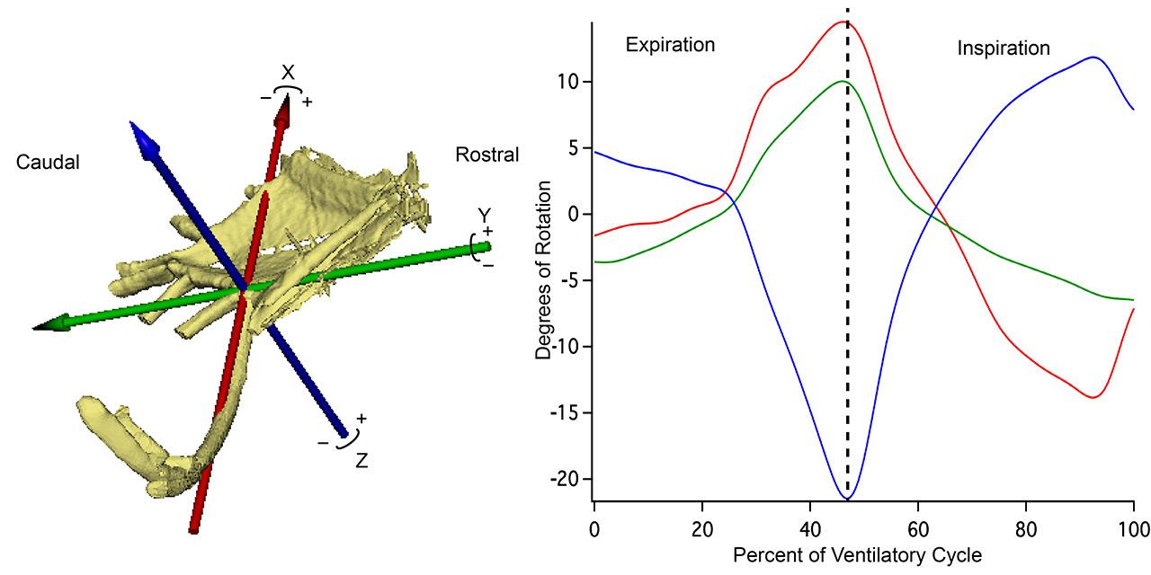 Xromm Ventilatory Rib Kinematics In The Savannah Monitor Lizard